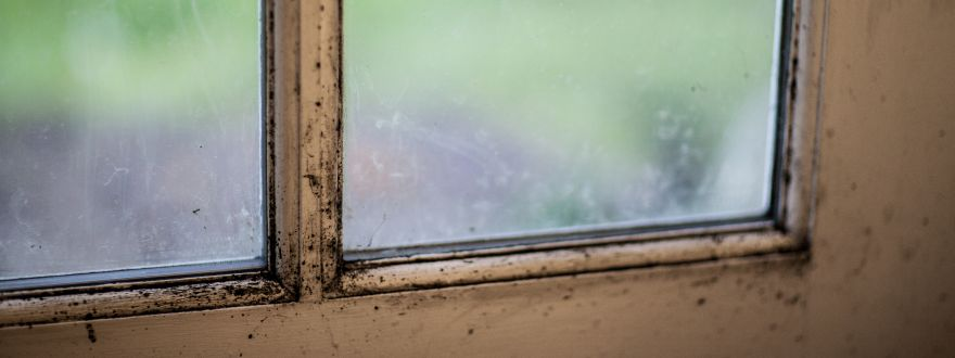 Protecting Your House From Mold