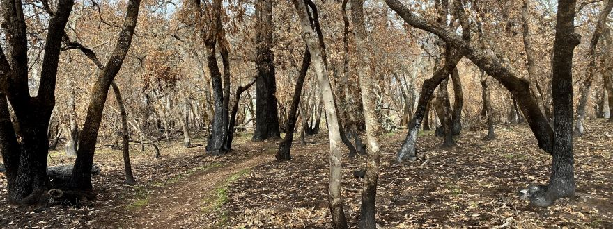How do Wildfire Mitigation Discounts Apply to ME?