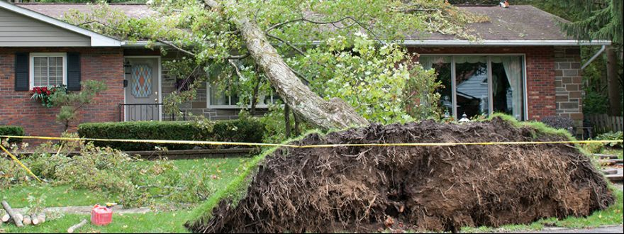If a tree falls on your house, are you covered?