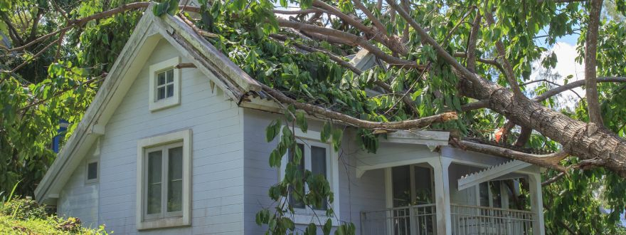 6 Insurance Tips on Trees