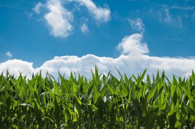 Minnesota Agribusiness Insurance