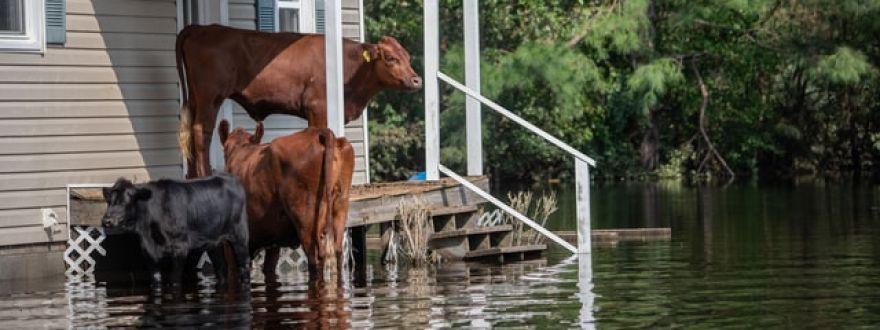Do I Really Need Flood Insurance?