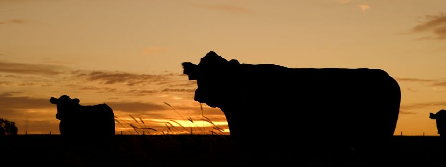 Farm & Ranch Insurance Update
