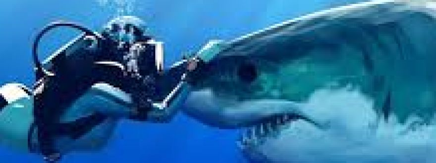 6 Everyday Things More Dangerous Than Sharks