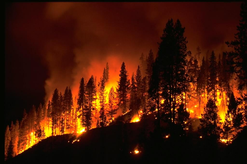insurance for Wild fires
