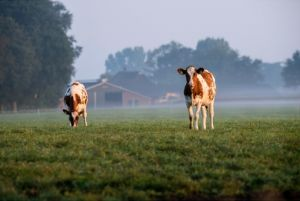 Dallas, Texas Agribusiness Insurance