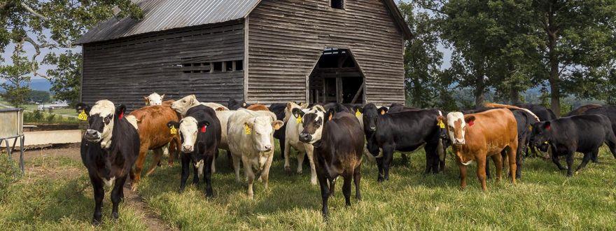 Farm and Ranch Insurance vs. Homeowners Insurance in Dallas