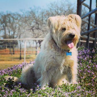 Pet Insurance, Texas