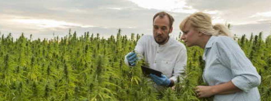 Cannabis insruance business